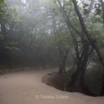 Mysty road to Seokguram grotto